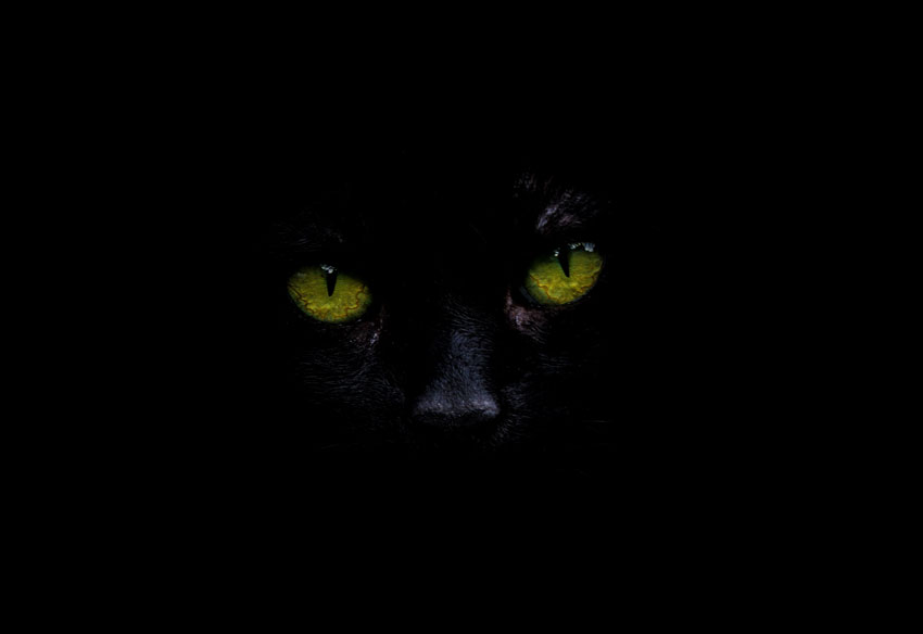 Tales of a Black Cat on Hallow's Eve